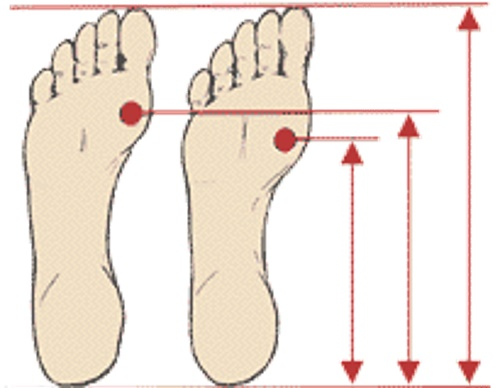 foot_joint_length
